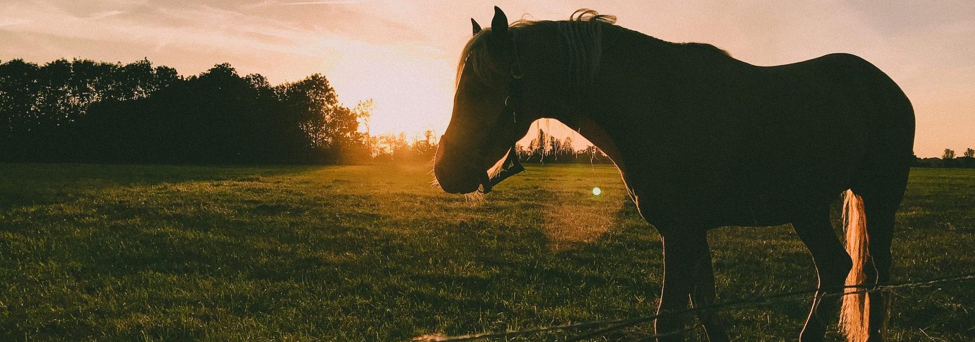 caballo puesta de sol